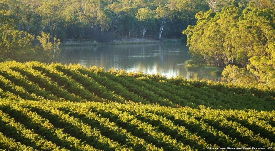 xl_13287_Riverland-Wine-Region-FDL-TP.jpg