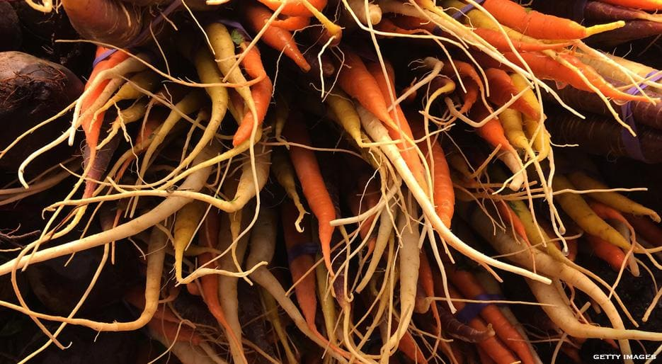 xl_13636_Roots-vegetables-FDL-TP.jpg